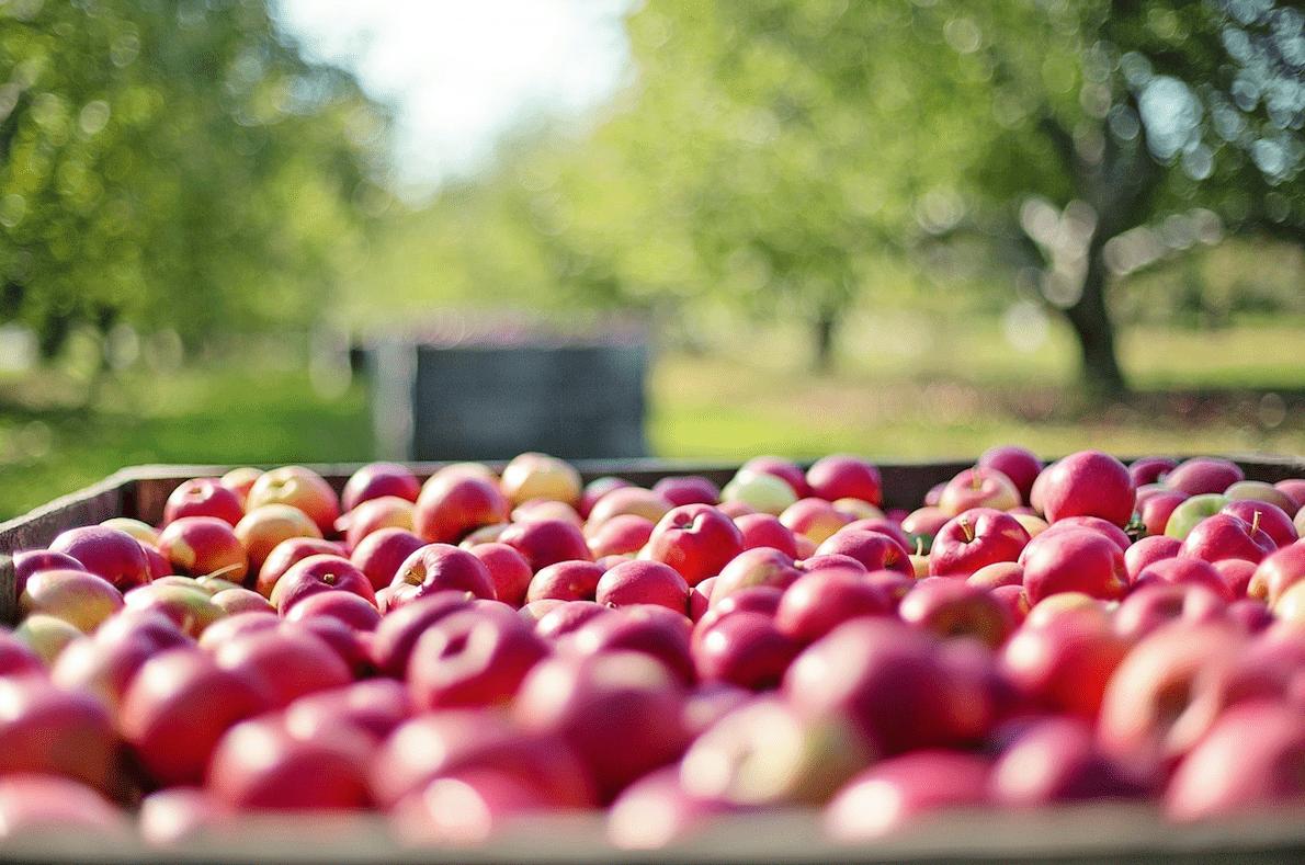 AUDITORIAS DE AGRO GESTIÓN (procesos, presupuestos, programas fitosanitarios, nutrición, labores, registro…)