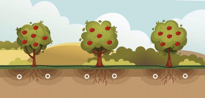 TUTORIAL, ¿Cómo tomar una muestra de suelo? – AGROLAB
