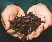 """Un """"Suelo Vivo"""", alarga la vida útil del huerto."""